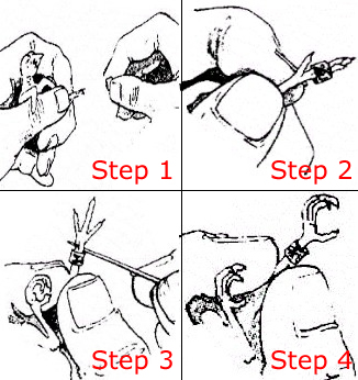 How to put on the bird foot ring