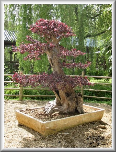 Paradisio (2009) : Le jardin Chinois -chine07