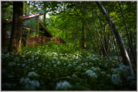Forest of Dean cabin