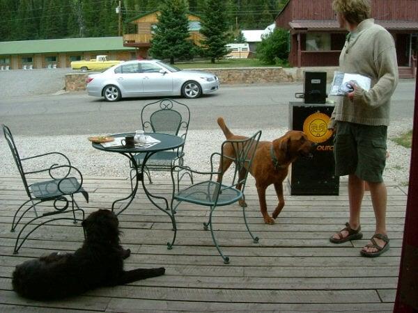 這裡的生活真簡單,一杯咖啡,兩隻狗狗