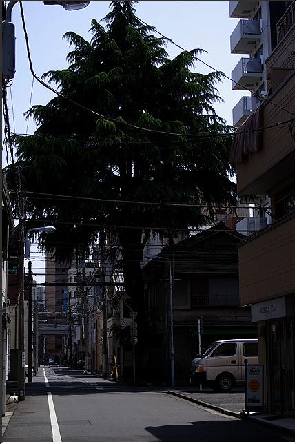 yanagibashi_090419_13.jpg