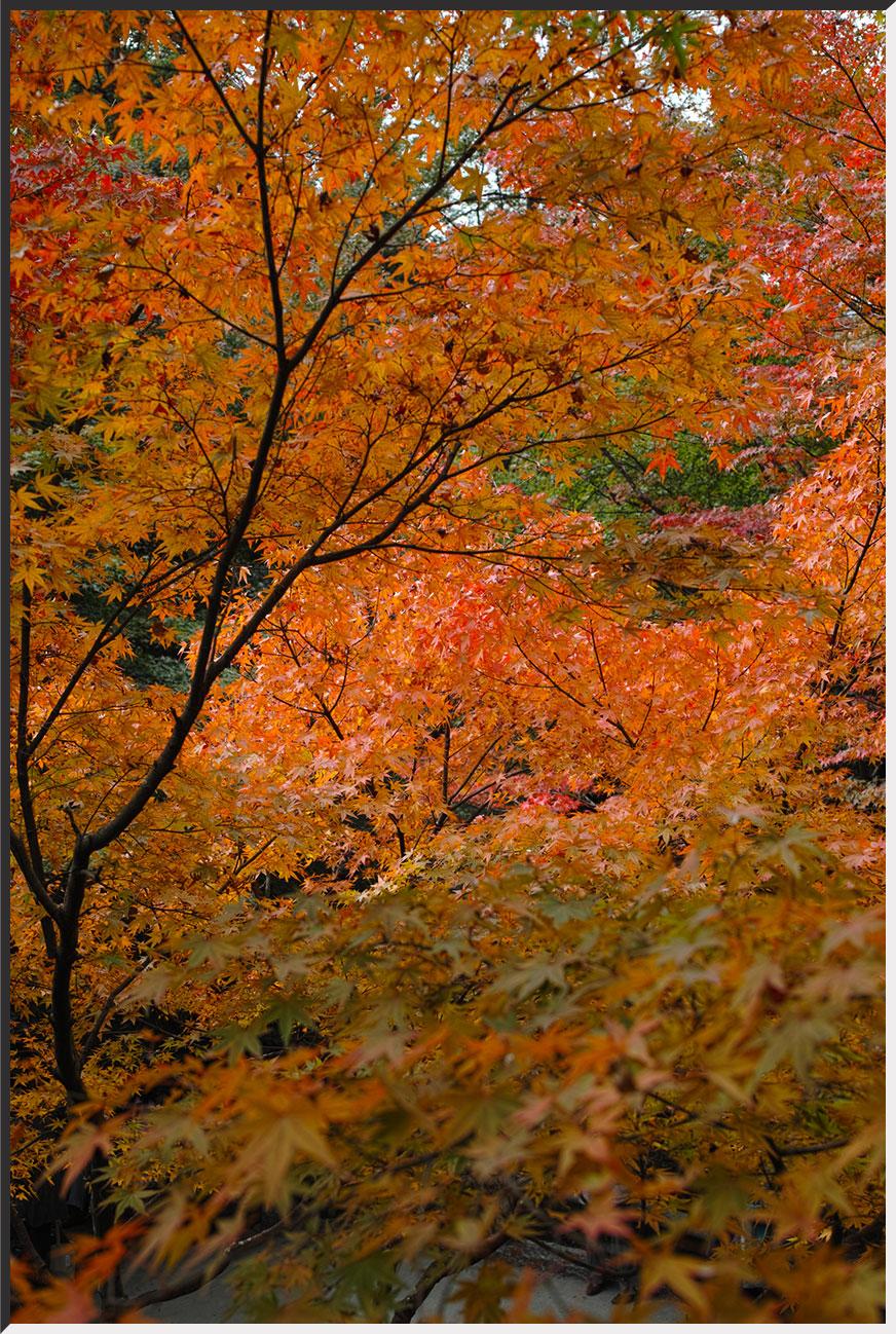 kyoto_121110_04.jpg
