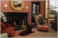 Prince Hall Country House - fireside and dog