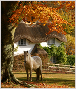 Autumn pony, New Forest, Hampshire