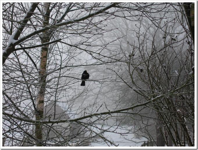 Winter 2010 003