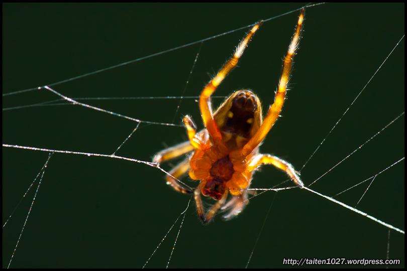 微距昆蟲-022.jpg (810×540)