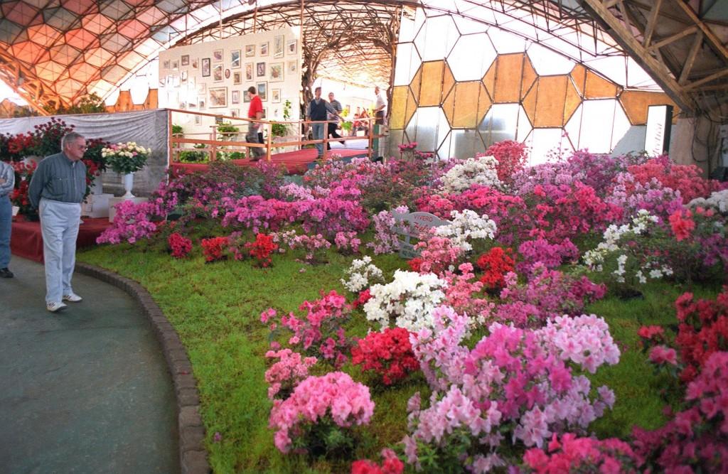 Fiesta Nacional de la Flor de Escobar