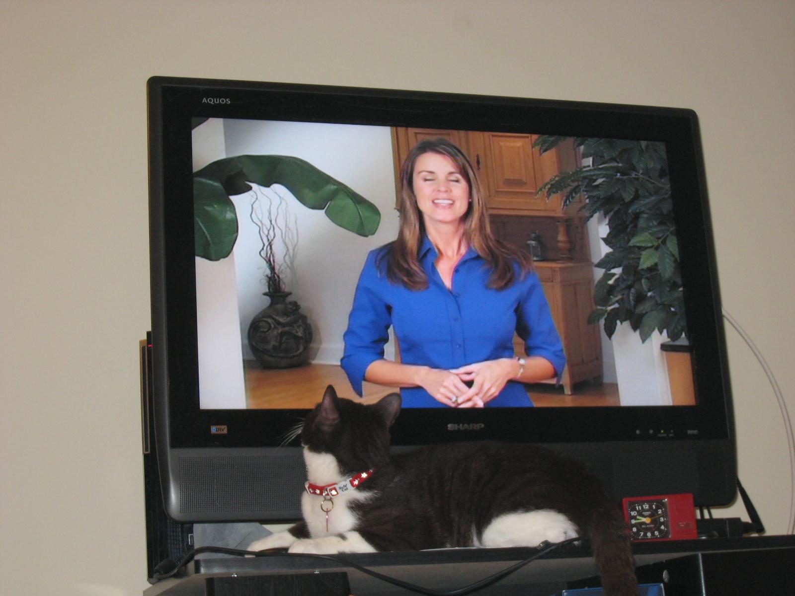 貓咪論壇- 我家的貓咪會看電視...