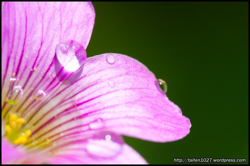 微距植物-024.jpg (810×540)