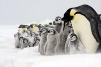 皇帝ペンギンサファリ&南極点フライト