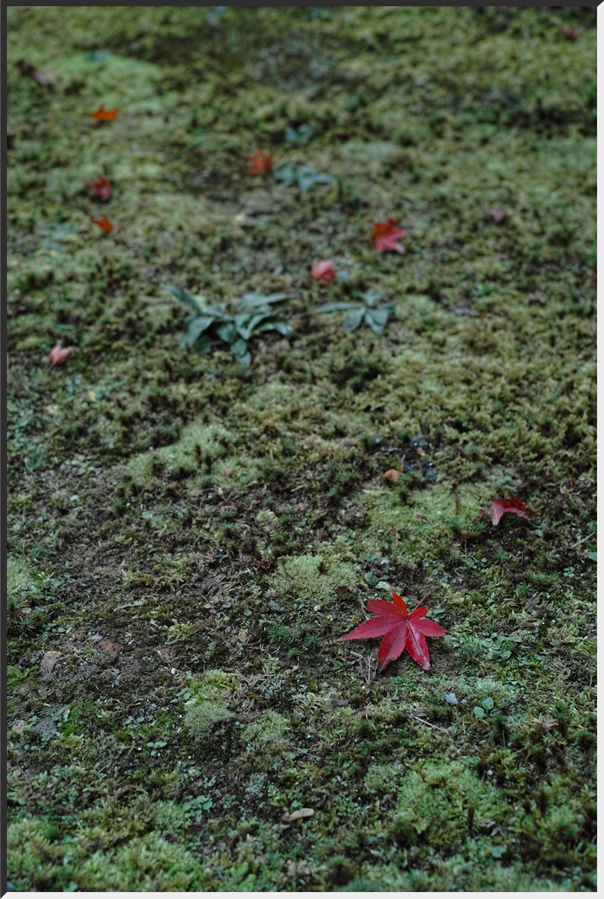 kyoto_121109_11.jpg