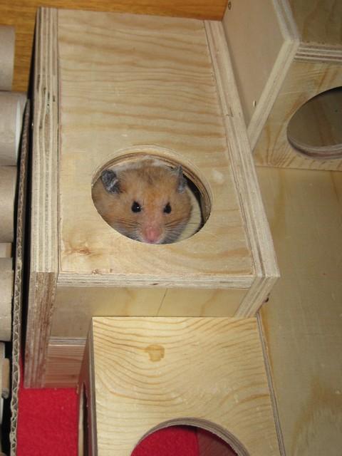 Da paßt der Hamster rein