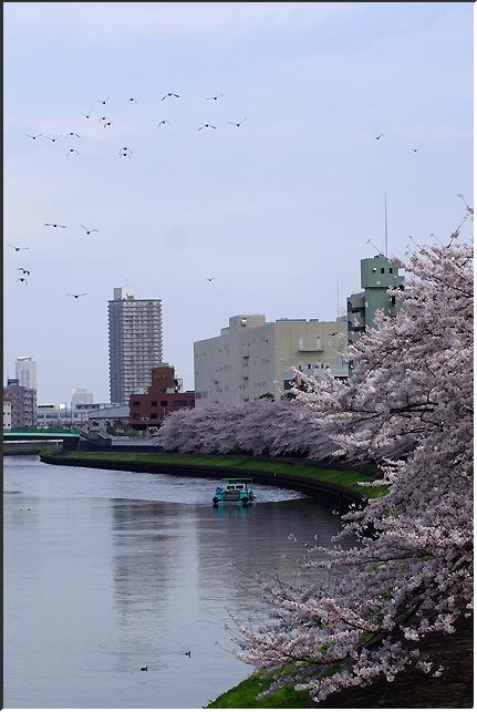 hanami_100403_01.jpg
