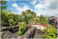 The Azorean Garden