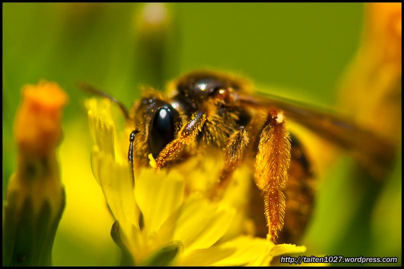 微距昆蟲-021.jpg (810×540)
