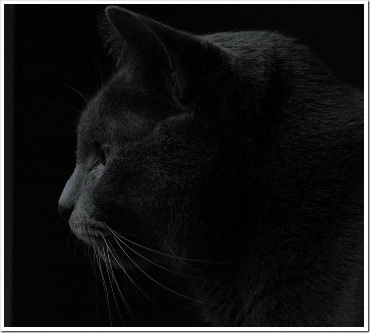 Mish im Dunkeln