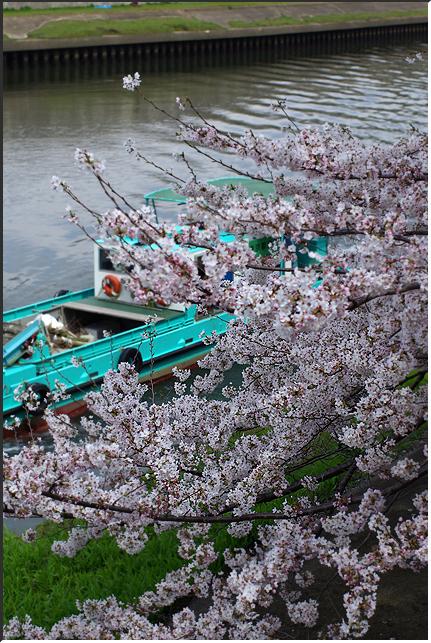 hanami_100403_02.jpg