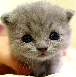 动笔将小猫的样子用简笔画出来
