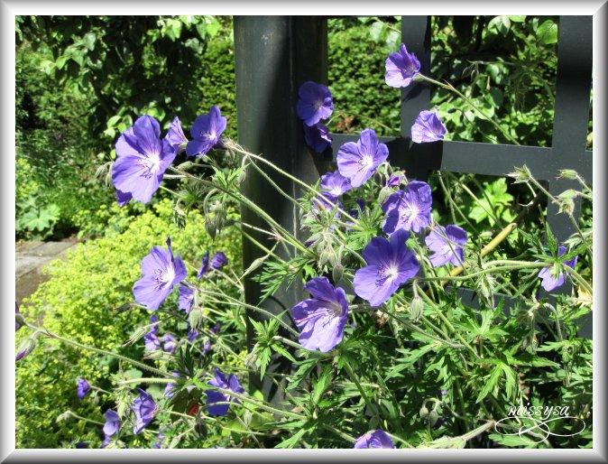 Fleurs et plantes sauvages - Page 2 -parc%2072