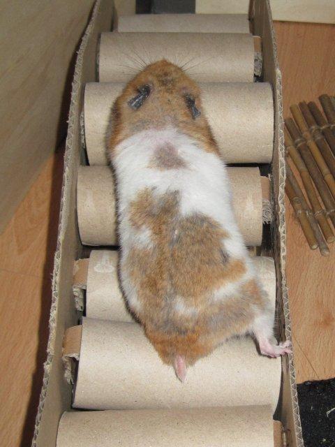 Fertig ist die Hamsterbrücke