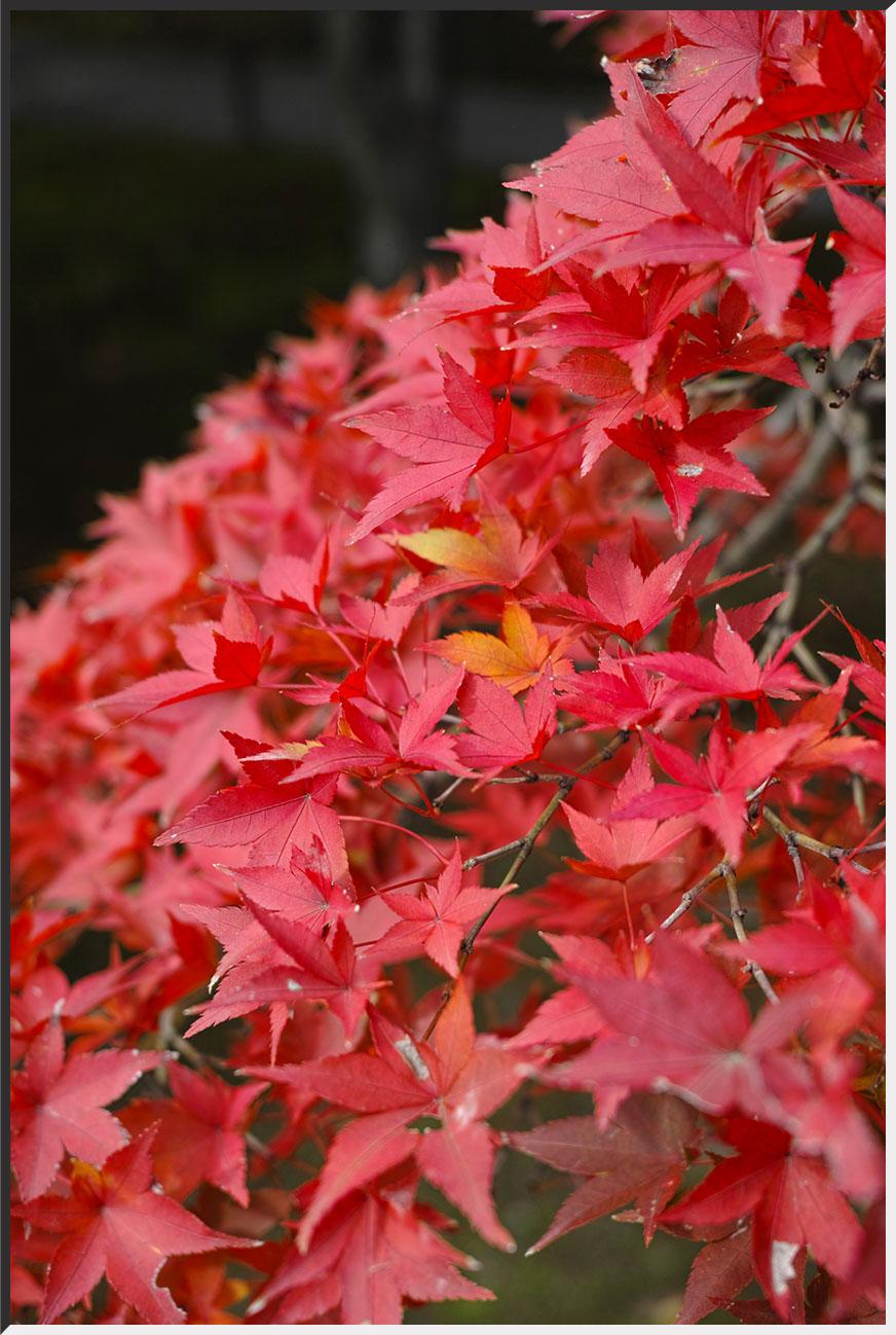 kyoto_121110_05.jpg