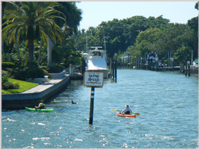 PLAYFUL . . . kayakers watch  a dolphin in a residential creek