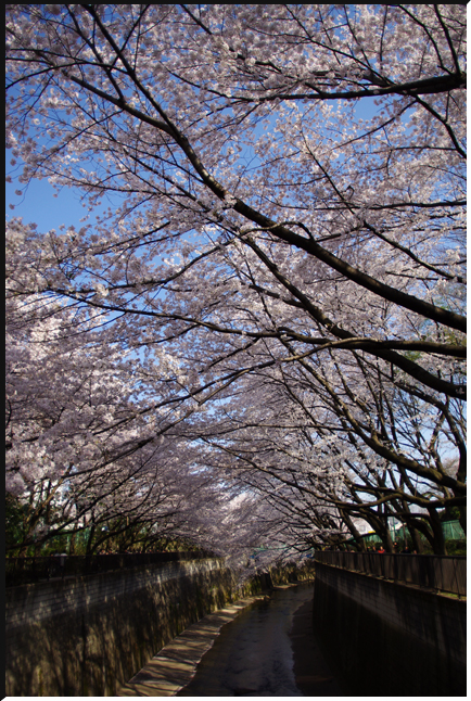 hanami_120408_03.jpg
