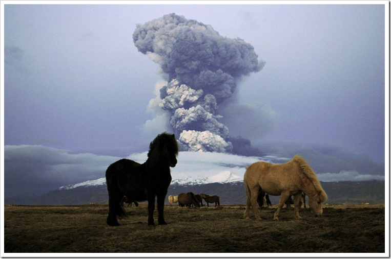 volcano eruption Iceland ponies Nordicphotos