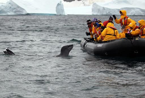 南極 オットセイ