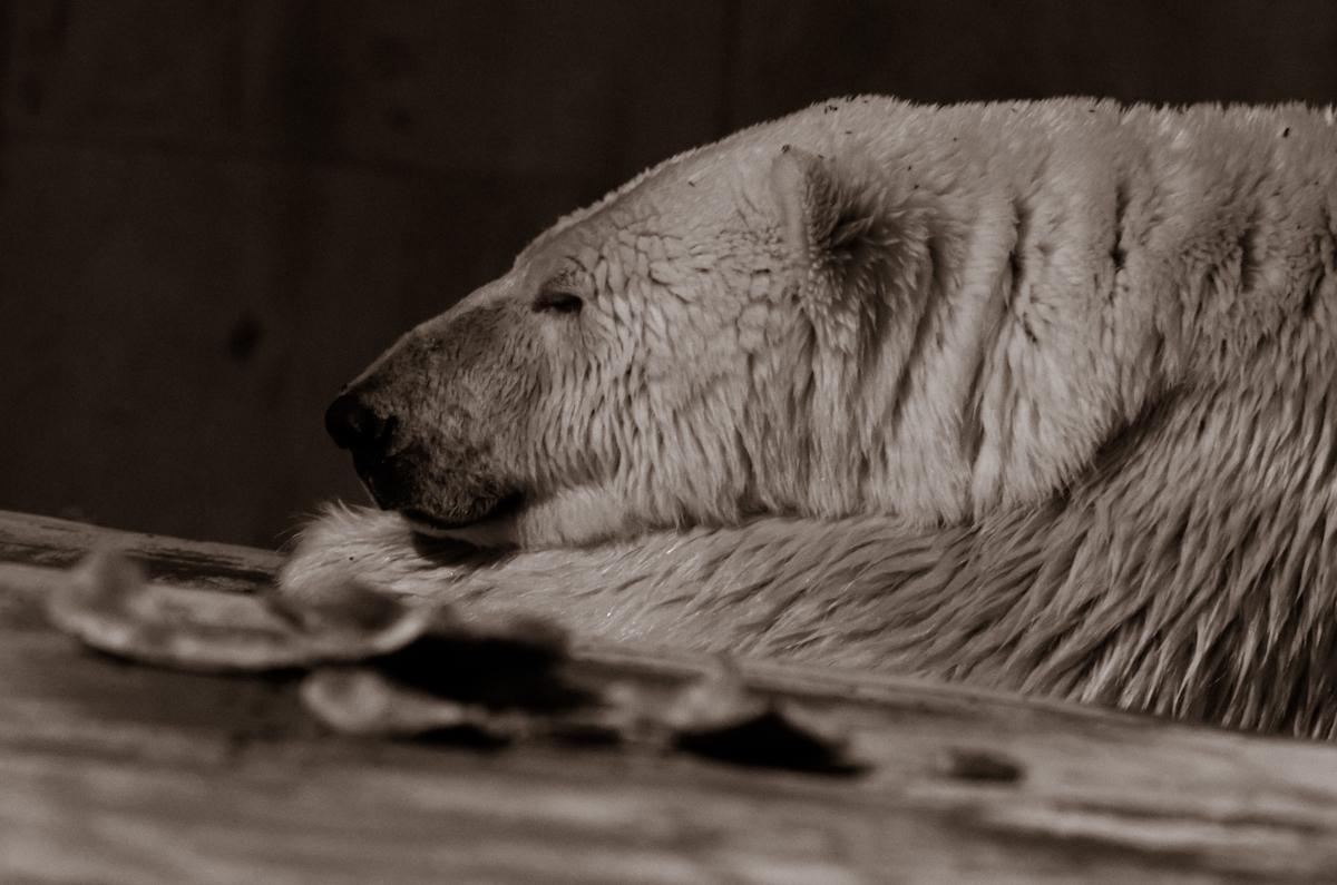 満足げな寝顔。スイカの夢でも見てんのかな?