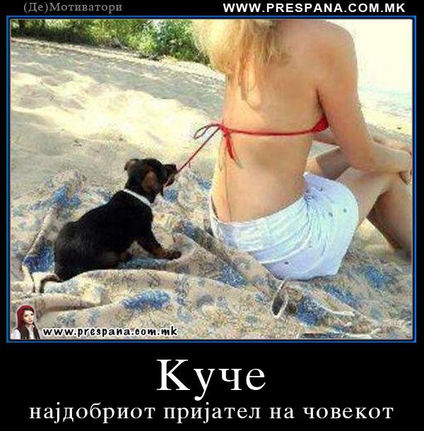 Куче најдобриот пријател на човекот
