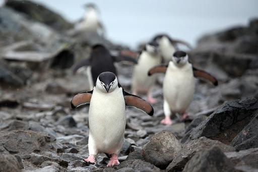 南極 ペンギン