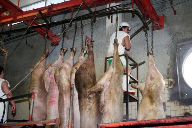 Tecnologia de Alimentos: ¿Cómo llega la carne a tu mesa?