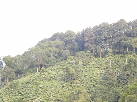 Pepohonan di Gunung Gede Pangrango