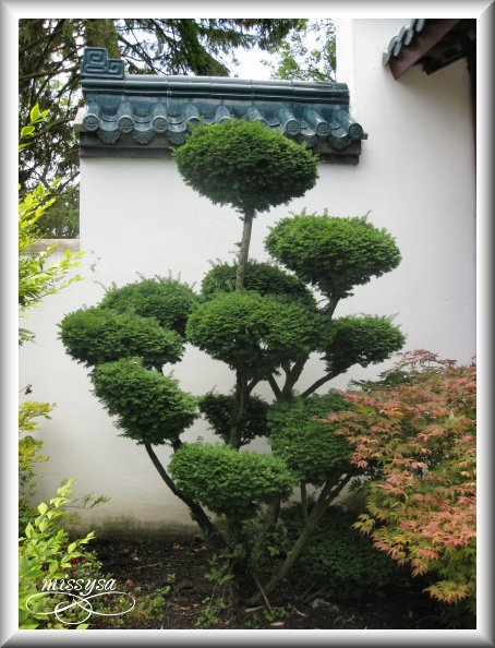 Paradisio (2009) : Le jardin Chinois -chine11
