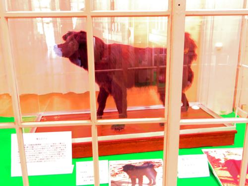 南極で活躍した樺太犬タロ