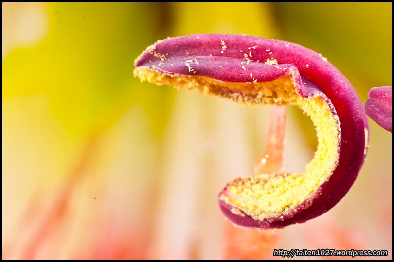 微距植物-023.jpg (810×540)