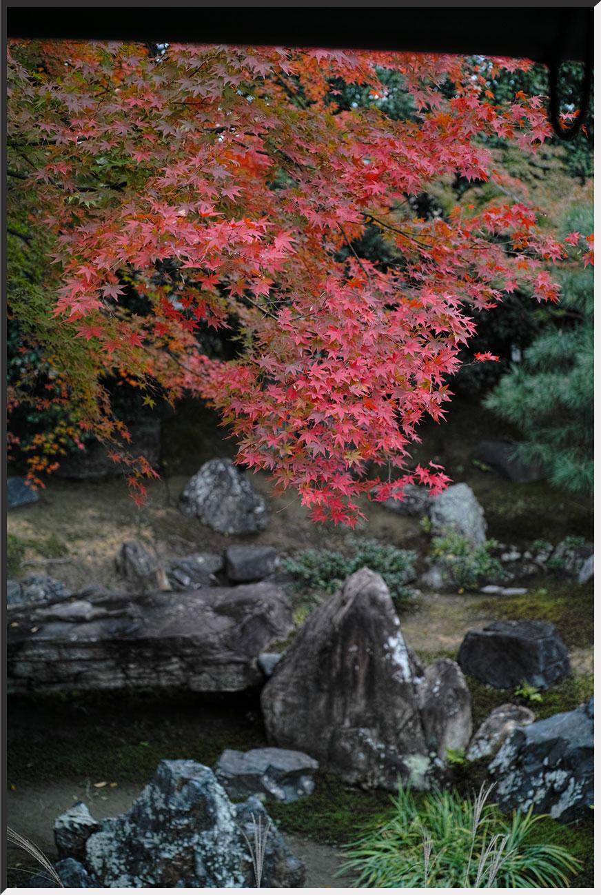 kyoto_121109_13.jpg